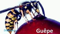 Comment réagir face aux piqûres d'insectes ?
