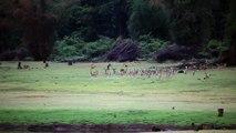 Wild boars vs dog | monkeys Vs wild dogs with music | Boars