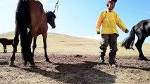 Mongolie: les enfants-jockeys s'entraînent pour le Naadam