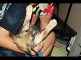 My dog suffering from Canine Distemper Virus