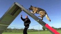 Kraftwerk K9 German Shepherd Maximum Versatility Protection Dog Challenge