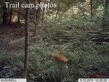 Trail cam photos-Bigfoot sighting area