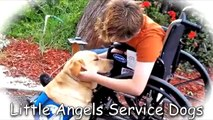 Little Angels Service Dogs - Changing Lives...One Dog At A Time