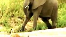 Documental de Leones Salvajes Cazando en Africa   Documentales de Animales Salvajes Español