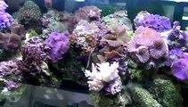 Décors et poissons d'eau de mer - aquariums - poissons - coraux - plantes aquatiques