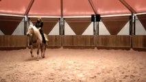Cheval Cirque dressage liberté