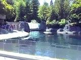 Baby Beluga Whale Vancouver Aquarium 2008