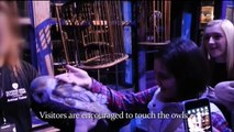 Revealed: Owls Mistreated at Harry Potter Tour