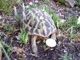 Tortoise and Eggs