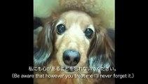 もういないキミへ ~犬とわたしの誓い~