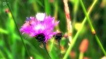 Wahl zur schönsten Wiese: Nur grün sein, reicht nicht
