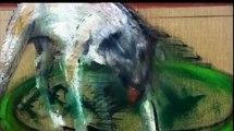 Francis Bacon Paintings - Squarepusher Oriënt Orange - Tipper Seldom Vile