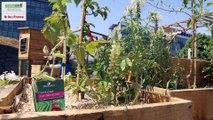 Ateliers d'été Agriculture Urbaine 2015
