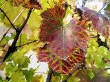 The Autumn - Toamna - Vivaldi