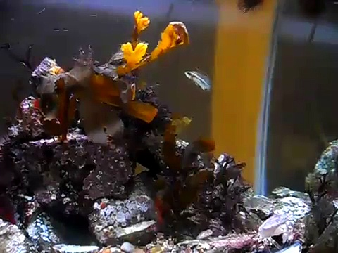 British Marine Native Aquarium
