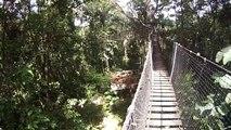 La faune et la flore en Guyane.  ( Acte 1 )