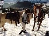 balade a cheval dans la neige(sur musique de goldman)
