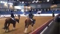 Fancy Favors, Fall World Show Sweepstakes Champion. For Sale