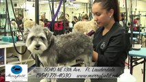 """Professional Grooming Coral Springs"", ""Dog Grooming School Coral Springs"", ""Grooming Coral Springs"""