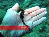 diving in Bali Creta with hippocampos dive center plongée en crète à bali