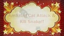 Cat vs Snake - Amazing Cat Attack & Kill Snake