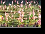Sensual Flower Prints as Giclee Art Prints