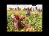Perspective Agricultural Extension: Research Extension Farmers Linkage