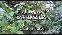 Meddling with Medlars