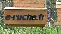 Les abeilles noires d'Ouessant s'installent à Noirlac...
