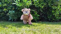 This dog dressed as an Ewok is so cute! Star Wars