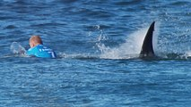 Pro Surfer Fights Off Shark On Live TV During Competition