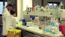 MOOC : Ouvrez les portes du laboratoire : cellules et cellules souches