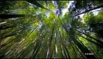 Un Viaje por el Planeta Tierra - Dia de la Tierra 2012