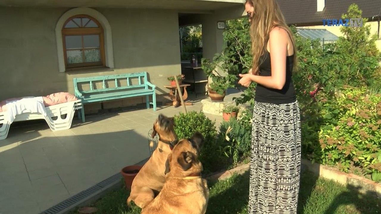 Chcela malého psa, z útulku si priniesla ´hebedo´
