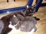 My Cat Kittys Kitties