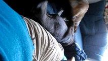Lustige Hunde Jack Russell Terrier Mani + Windhund Kim Spass, Fun und totlachen garantiert