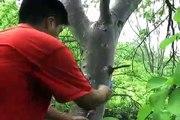 Investigación sobre los anillos de los árboles