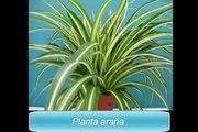 Plantas de interior - 6 plantas para purificar el aire