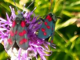 Brockadale woods The beauty of British meadows (Butterflies)