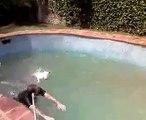 Mumi (kiara) Tetè bull terrier  nadadora/ Mumi (kiara) Tetè swimming bullie