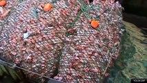 Des filets de pêche géants qui capturent 100 tonnes de poissons - Désastre écologique