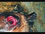 Horse Slaughter - Fallen, Sarah McLachlan