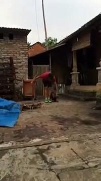 Dog training: Puppy training