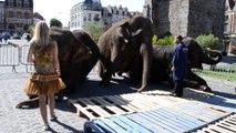 Les éléphants du cirque Medrano s'installent sur la Grand-Place