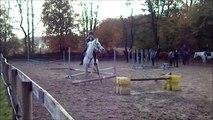 Cours saut d'obstacles - refus - presque chute