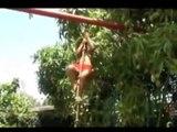 jean christophe bourre voeux bonne année 2010 tahiti