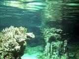 Acquario di Genova - Chouwa oto with reflection [Kokia]