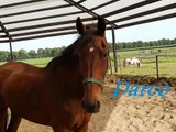 de paarden en pony`s van manege visdonk