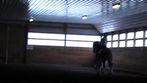 Rohmeo, 7 yr old gelding by Rohdiamont, Dressage Horse SOLD at Five Stars Farm