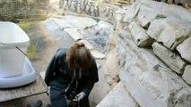 Maltraitance au Zoo de la Palmyre(Charente-Maritime)